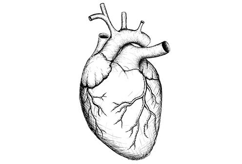 Danish Researchers Discover A New Inherited Heart Disease University Of Copenhagen